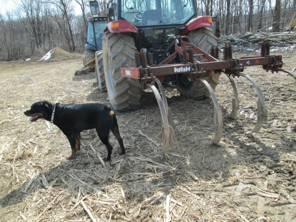 Back by popular demand - more Strider pictures! He is wondering how the mechanics of a chisel plow work.