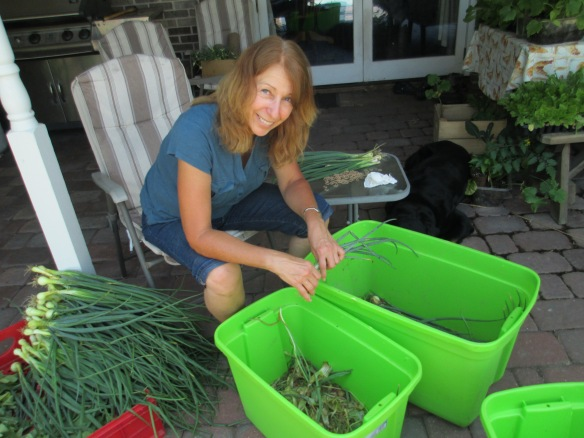 Mama Wagner sorting alliums!