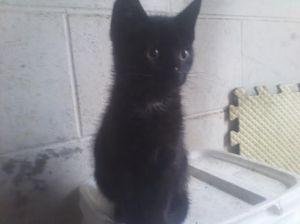 totoro kittens