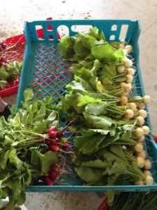 radish and turnips