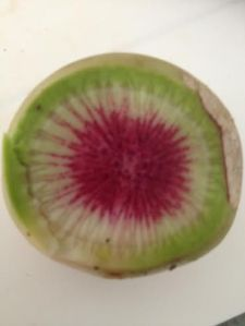 watermelon radish 1