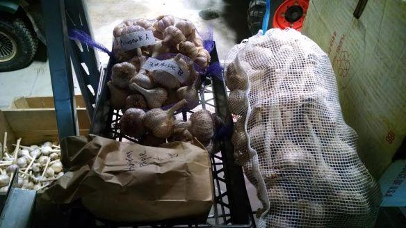 garlic stock