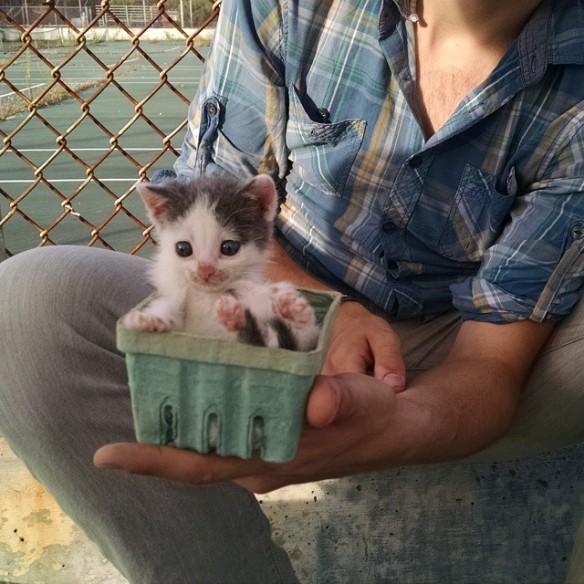 market kitten