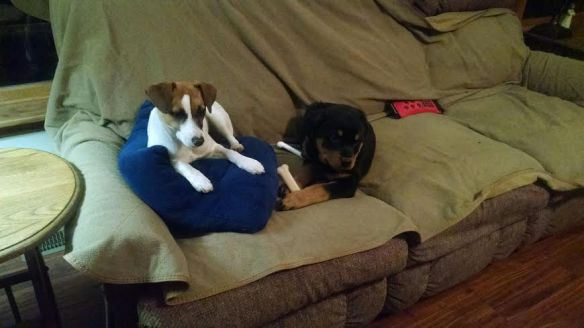 couch puppies