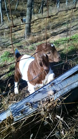 Plus, farm inspections usually include great animals, like this precious girl.